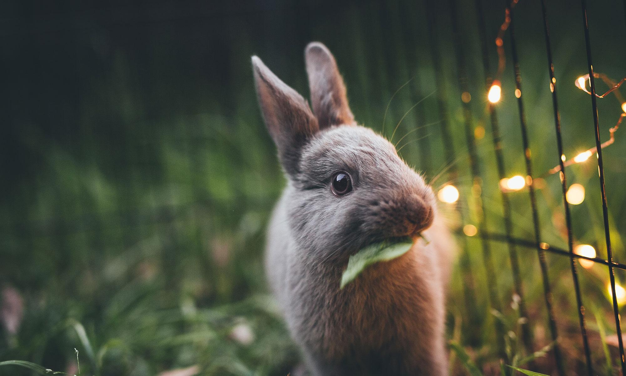bunny sparkle